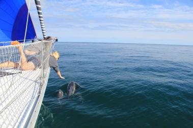 dauphins-sous-spi