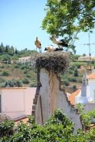 Cigognes Portugaises