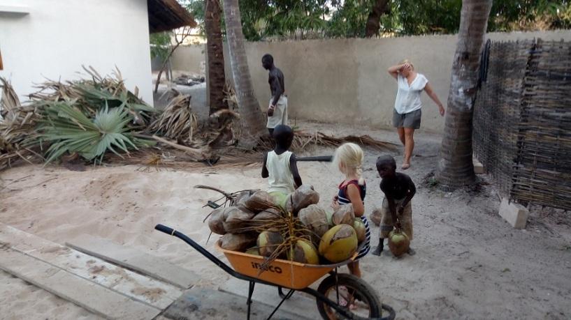 Ramassage de noix de coco